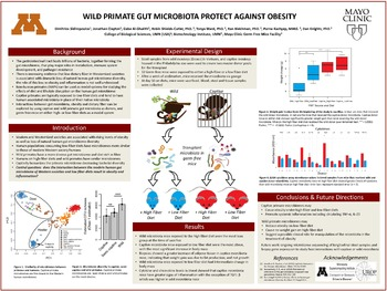 Wild Primate Gut Microbiota Protect Against Obesity